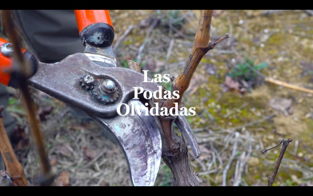 Imagen del cortometraje las podas olvidadas