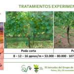 Ponencia sistema de poda en varidedad albariño jornadas viticultura SECH