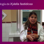 Entrevista a Margarita Gomila sobre microbiología Xylella fastidiosa