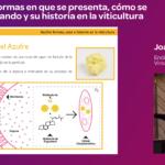 ponencia Joan Asens Granja Cando 19