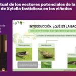 Ponencia sobre situación vectores xylella Maria Antonia Tugores SECH 2018